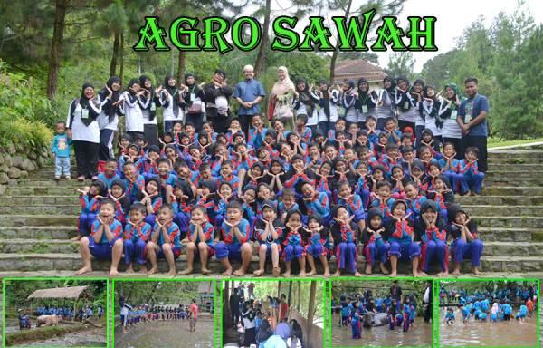 agro-sawah