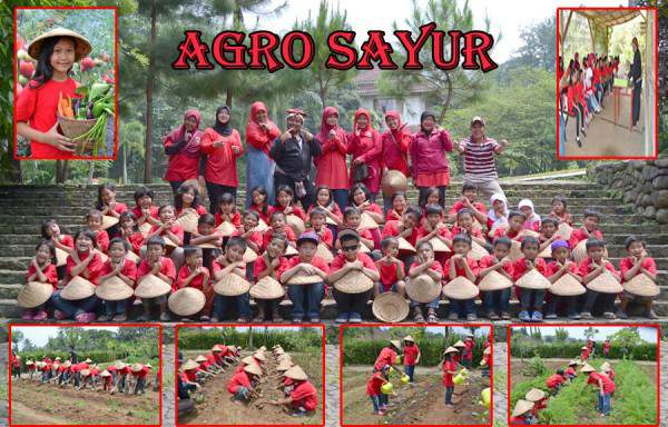 agro-sayur